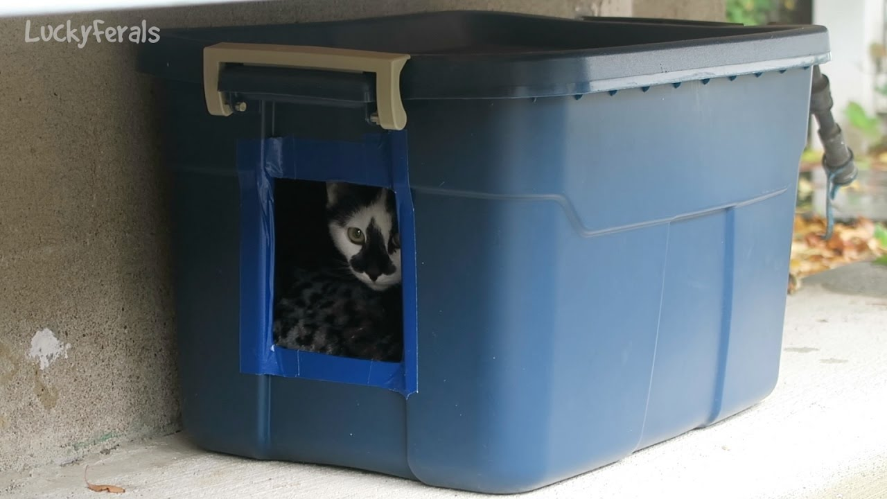 Making another diy feral cat shelter for outdoor cats for How to buy a house cheap