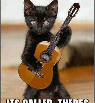 Cat Playing Music Meme