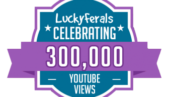 Celebrating 300,000 Video Views On The Lucky Ferals YouTube Channel