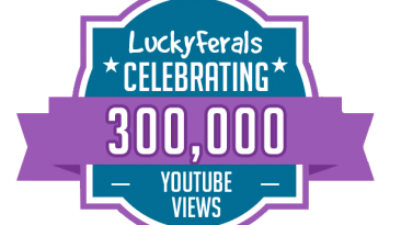 300000 YouTube Views Milestone