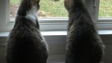 Cats Watching Goose