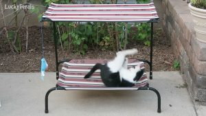 Cats React To New Pet Cot Lounge Chair With Canopy