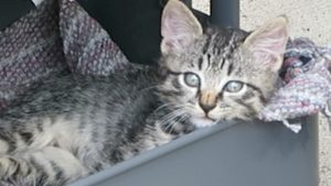 Cute Feral Kitten Discovers Utility Cart Cat Condo