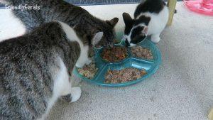 Do The Cats Prefer Turkey Friskies Or Turkey Sheba