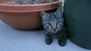 Feral Kitten Hunting Bugs