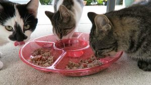 Trader Joes Ocean Fish, Salmon, And Rice Dinner Cat Food Product Review