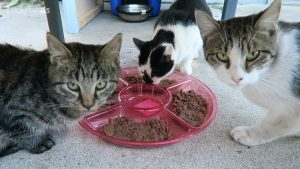 Trader Joe's Tuna For Cats Product Review