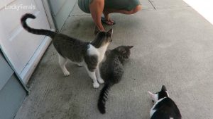 Training Feral Cats With Cat Treats