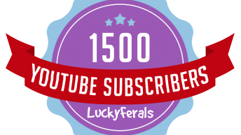 Celebrating 1500 Subscribers On The Lucky Ferals YouTube Channel