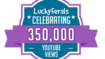Celebrating 350,000 YouTube Views On The Lucky Ferals YouTube Channel