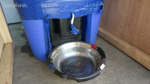 Another Raccoon Proof Feral Cat Feeder Update And Improvements - PetSafe Automatic Feeder