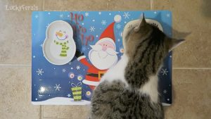 Cat's Christmas Place Setting - DIY Christmas - Feeding Feral Cats