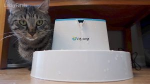 Cats React To IsYoung Pet Fountain - Product Review Unboxing