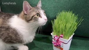 Stella's Cat Grass Mother's Day Present From Splash And Simba