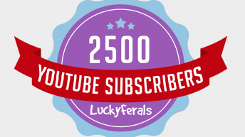 Lucky Ferals Celebrating 2500 YouTube Subscribers!