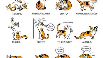 Cat Language - What Is Your Cat Telling You?