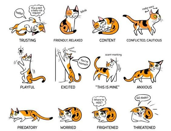 Cat Language What Is Your Cat Telling You Lucky Ferals