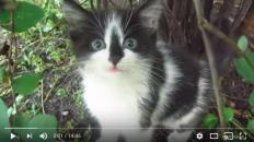 feral kitten reminds me of splash