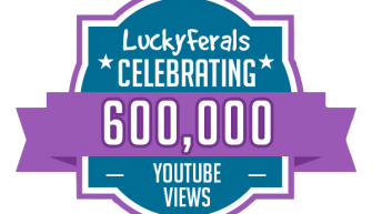 Celebrating 600,000 Video Views On The Lucky Ferals YouTube Channel!