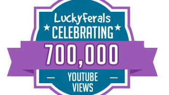 Celebrating 700,000 views on the Lucky Ferals YouTube Channel!