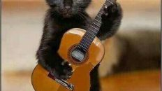 black cat with guitar