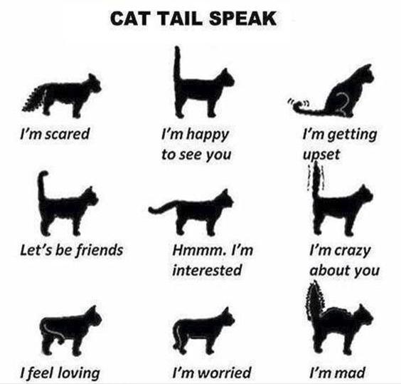 cat tail speak