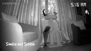 Cats Caught On Camera - First Night With New Cat Tree - Arlo Pro Security Camera