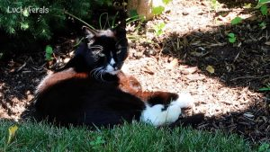 Feral Cat Meows For The First Time - Hydrox Speaks