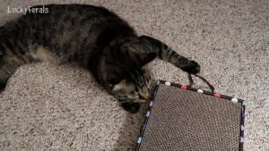 NoysPets Hanging Cat Scratcher Unboxing Review With Catnip And Toy