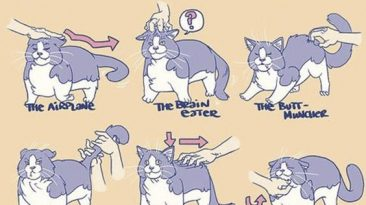 ways to pet your cat