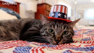 4th Of July Cats! Happy 4th Of July From The Lucky Ferals