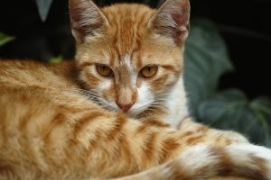 Feral Cat Myths