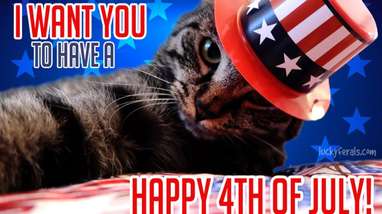 Happy 4th Of July Cat