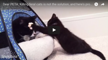 Dear PETA: Killing feral cats is not the solution, and here's proof!
