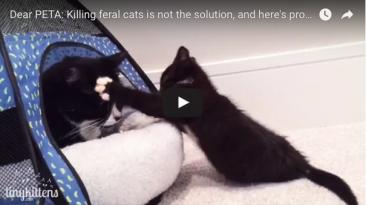 PETA killing feral cats