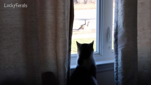 Cat Watching Geese Through Window From Scratching Post Cat Tower