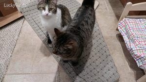 Cats Behaving Badly - Who Ripped Up The Rug?
