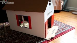 DIY Cardboard Cat House Two Month Update