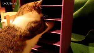 DIY Interactive Cat Treat Feeder - Stella's New Snack Bar