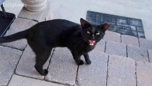 Boo Day 8 - Who's Hissing? - Training and Socializing A Feral Cat