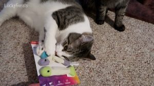 Cats Get New Sardine Toys - SmartyKat Fish Flop Cat Toy Catnip Crinkle Toys