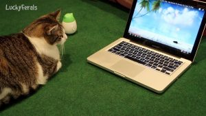 Cats React To A Video For Cats - Summer Mouse Hunt Video Game