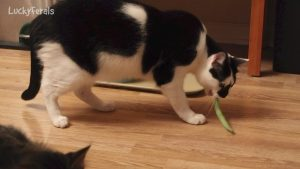 Do Cats Like Green Beans? Part 2 - Splash And The Green Bean