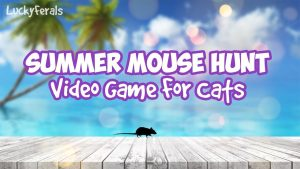 Summer Mouse Hunt Video Game For Cats Only - Cat Games On Screen For Cats To Play