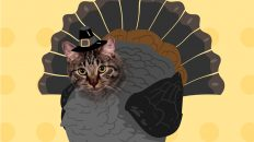 Thanksgiving Caturkey