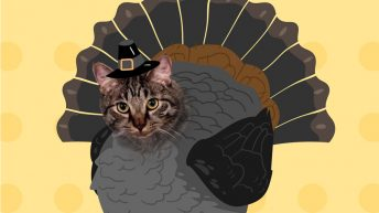 Happy Caturkey Day!