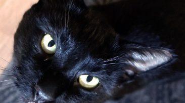 black friday black cat