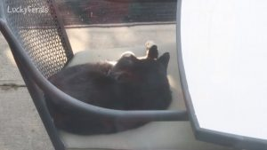 Boo Day 102 - Hydrox On The Patio Chair - The Lucky Ferals