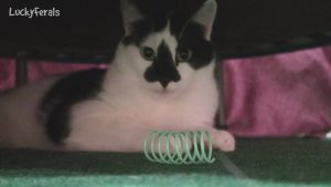 Spot Colorful Springs Cat Toys Product Review - Ethical Pet Springs