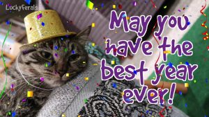 Happy New Year From The Lucky Ferals! May You Have The Best Year Ever! Cats In Hats!